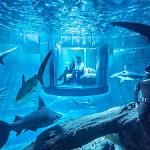 Airbnbでサメの部屋が登場し話題に